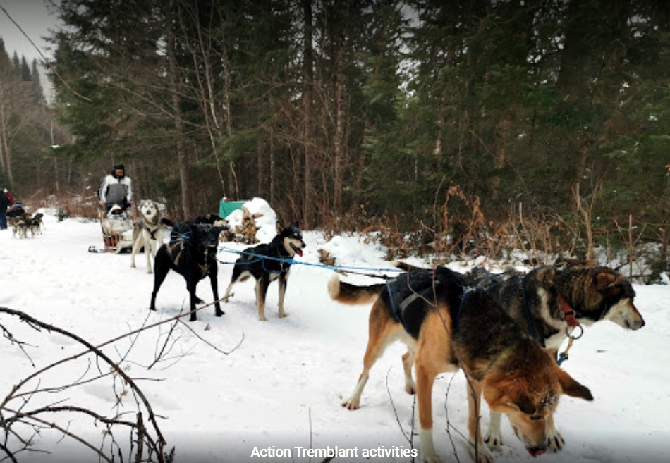 dogsled-2